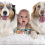 How to get pet dog ready for new baby
