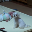 Adorable Baby Hushed By Howling Puppy Each Time She Cries