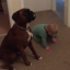 Toddler And Dog Both Obey 'Sit' Command (And It's Hilarious)