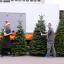 Your guide to buying a live Christmas tree in Singapore