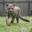 See the cutest baby animals at the Singapore Zoo