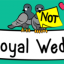 Not The Royal Wedding #9: How Couples Feel One Week Before Tying The Knot