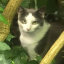 Brighton Cat Stabbings: Police Launch Investigation After Seven Attacks, Including Three Fatal Ones