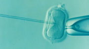 What does IVF stand for?
